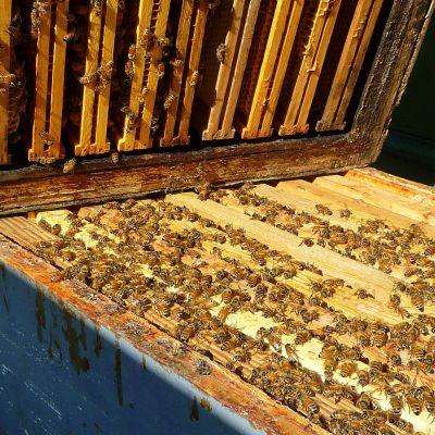 Mehiläisten pesä auki