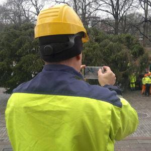Åbos underhållsbolag Kuntec skötte transporten av domkyrkans julgran
