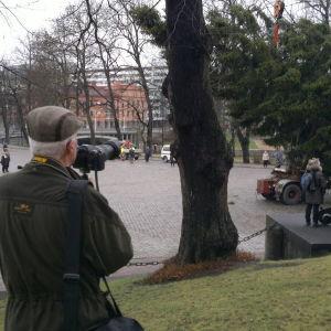 Julgranen i Åbo restes i vindstilla förhållanden