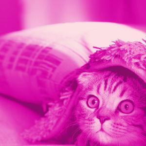 Digitreenien pääkuva. Kuvassa ihminen, jonka kasvoja ei näy ja teksti Datajälki.