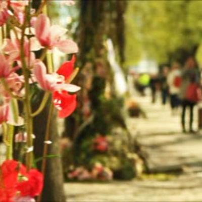 Lyktstolpar på Esplanaden i Helsingors prydda med blommor.