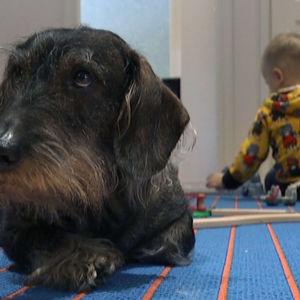 Koira makoilee matolla, lapsi leikkii taustalla.