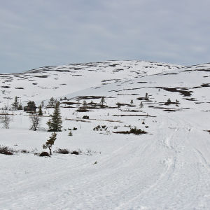 hiihtoladut Pallas-Yllästunturin kansallispuistossa