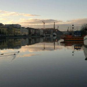 Fem änder simmar förbi stadsfärjan Förin i Aura å en tidig sommarmorgon.