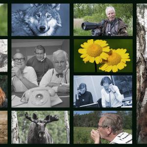 Ett bildkollage på radioprogrammet Naturväktarna.