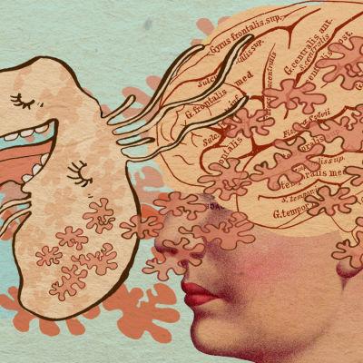 Suolistobakteerit tuottavat aivoihin vaikuttavia välittäjäaineita.