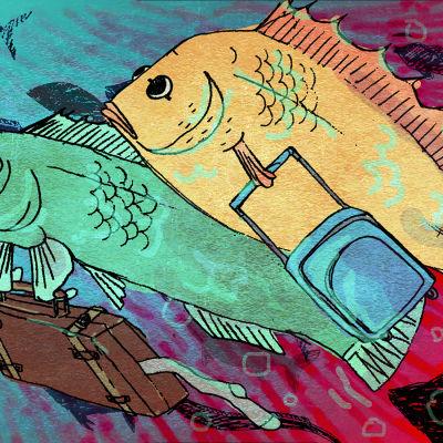 Kalat pakenevat ilmastonmuutoksesta lämpeneviä vesiä kohti maapallon napoja.