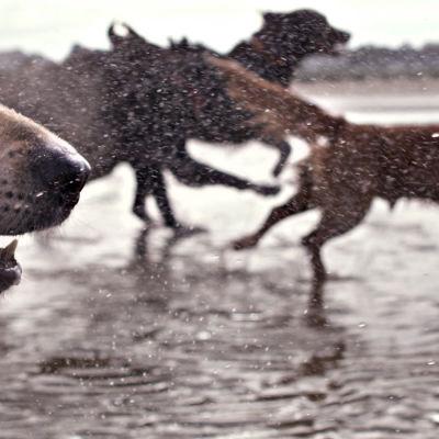 Prisma: Koirien salattu elämä, yle tv1