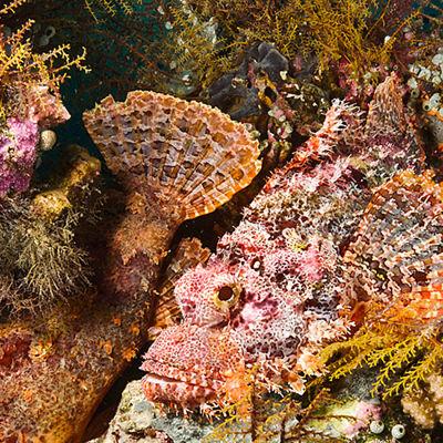 Avara luonto: Kaupunki meren alla, yle tv1