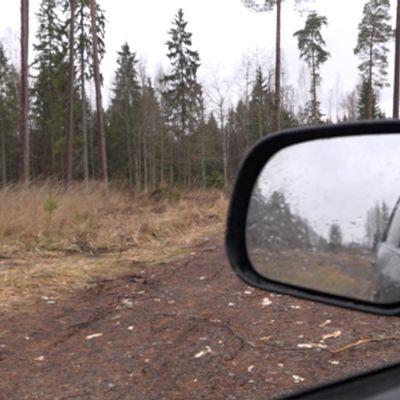Skog i Estland
