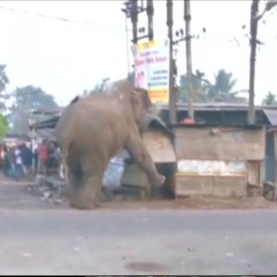 Elefant förirrade sig in i den indiska staden Siliguri.