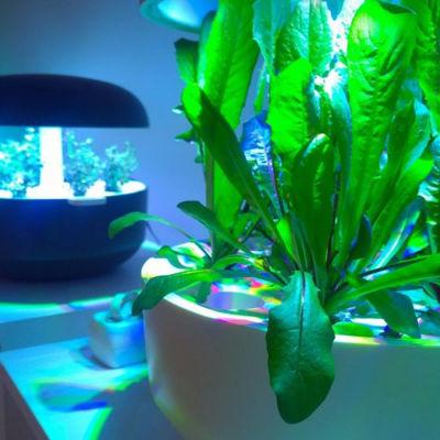 Smartträdgårdar där växter odlas