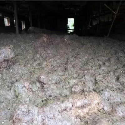 Bild på fårfarm i Somero där de misskötta djuren nödslaktades.