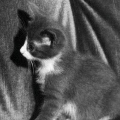 Kissanpentu Eläinperheet-opetusohjelmassa vuodelta 1971.
