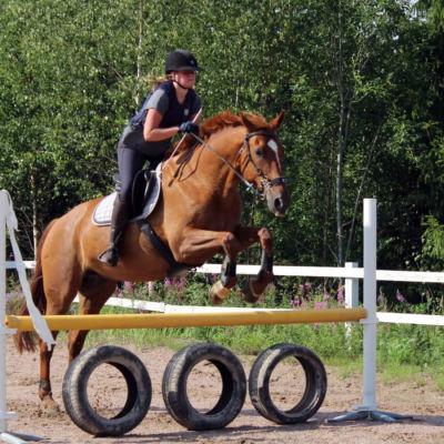 En häst hoppar över ett hinder.