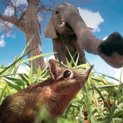 avara luonto pikkuotusten maailmat, yle tv1