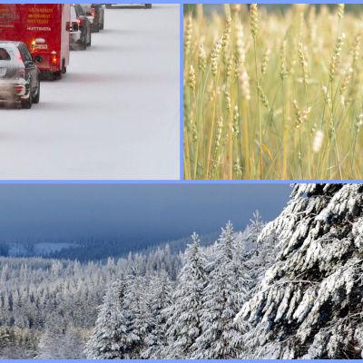 Illustrerande bild av trafik, jordbruk och jordbruk.