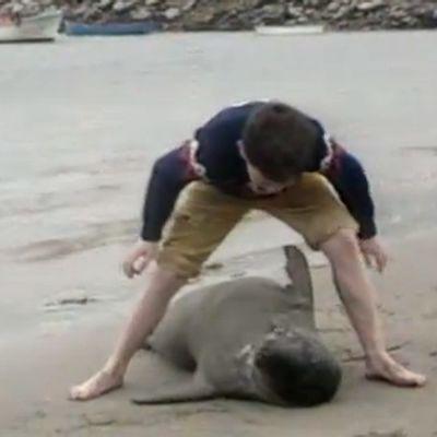 Poika ja hylje leikkivät rannalla.