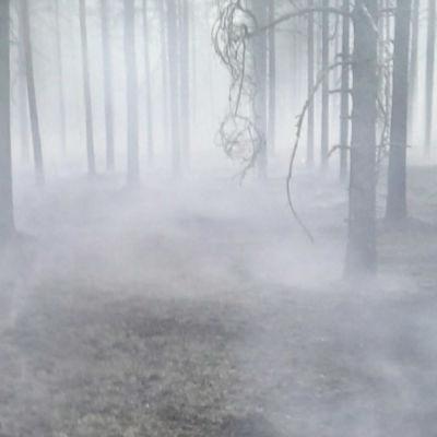 Det ryker i skogen efter en markbrand.
