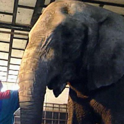 Vanni-norsu hoitajineen Zoolandiassa.