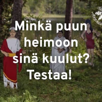 Teksti: Minkä puun heimoon sinä kuulut? Testaa!