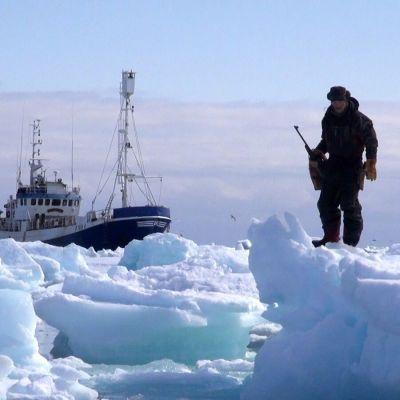 En säljägare står ute på ett isflak med gevär i handen, i bakgrunden syns ett fartyg.
