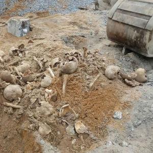 Skelettbitar i sanden
