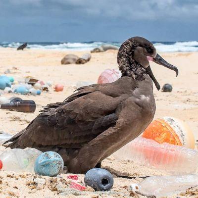 En fågel på en skräpig strand.