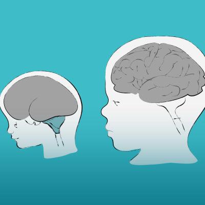 Piirretty kuva. Lapsen aivojen kehitys.