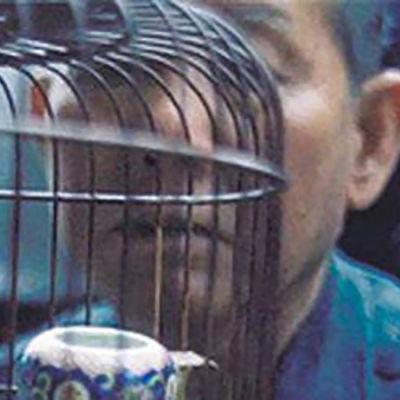 Hongkong. Kowloon lintutori (1996)