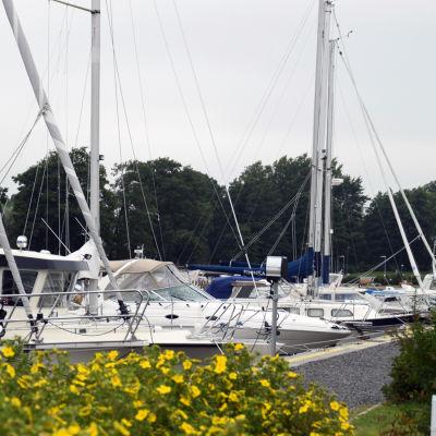 Båtar står förtöjda i en småbåtshamn. I förgrunden syns en buske med gula blommor.