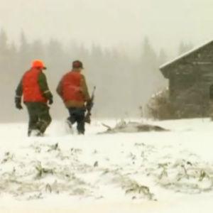 Två jägare går till en skjuten älg, 1992