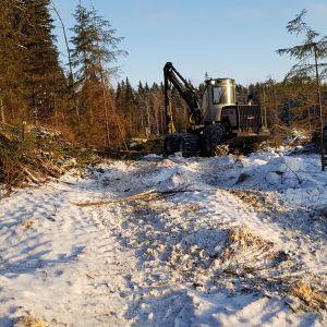 Puukorjuuta Mikkelin Visulahden ja Juvan Nuutilanmäen välillä uutta Viitostien linjausta varten.