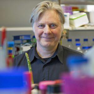 Tutkimusjohtaja Juha Klefström työpaikallaan Biomedicumissa.