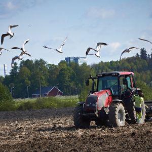 traktori kyntää peltoa