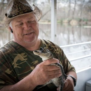 Usa alligaattorit.