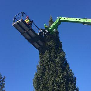 Miehet nostettiin puun yläosiin ottamaan pistokkaita.