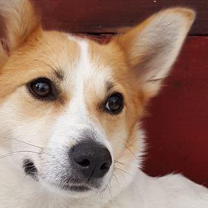 """""""Unnilta terkut kaikille koirakavereille! Hyvää koiranpäivää!"""