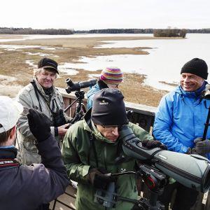 Viikin Tornihaukat Hakalan lintutornissa Helsingin Vanhankaupunginlahdella. BirdLife Suomen Tornien taisto kilpailu järjestettiin 5. toukokuuta. Tapahtumassa lintuharrastajat pyrkivät näkemään tai kuulemaan mahdollisimman monta lintulajia lintutornista kahdeksan tunnin aikana.