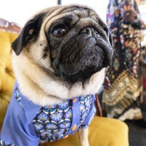 Koirien instakuvauspiste jossa koiran voi pukea erilaisiin asusteihin .
