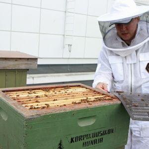 Mehiläishoitaja pesän äärellä