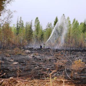 Palomiehet sammuttamassa metsäpaloa.
