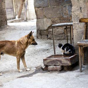 Koditon koira ja kissa kujalla.