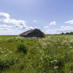 Vanha lato kesäisessä peltomaisemassa.