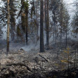 Pyhärannan metsäpalo 18. heinäkuuta