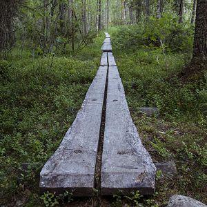 Pitkospuut Tiilikkajärven kansallispuistossa.