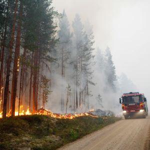 Paloauto palavan metsän vieressä.