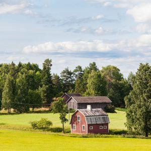 Maalaismaisema jossa pari latoa ja vanha talo.