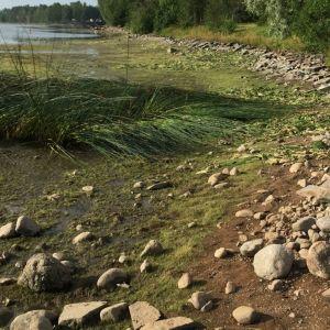 Vesi oli hyvin matalalla Vuoksessa elokuun 2018 alussa.