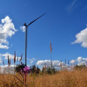 Tuulivoimala Lakiakankaan tuulipuistossa Isojoella.